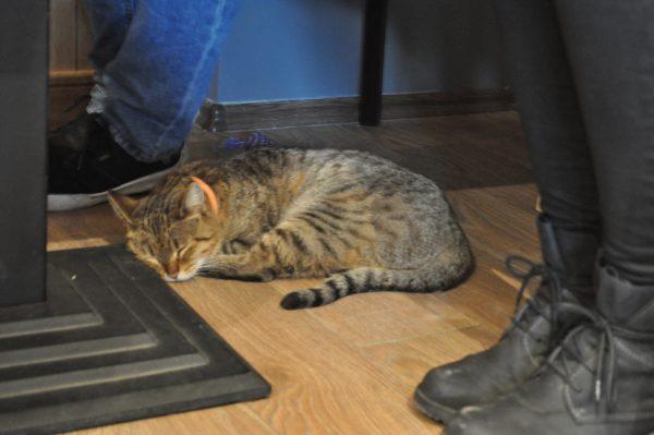 Cleo îşi face interminabilul somn de frumuseţe